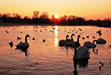 Lake Swans Birds Sunset Art Print Canvas Poster,Home Wall Decor(24x36 inch)