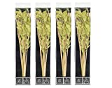 Hosley Set of 4-12.5'' High Botanical Diffuser Reeds - Green/Natural. Ideal Gift for Weddings, House Warming, Home Office, Reiki, Meditation Settings O6