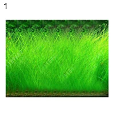 wpOP59NE 10g Aquarium Water Grass Seeds Aquatic Cow-Hair Plants Fish Tank Landscape Decor - 10g Big Hairy Seeds Plant Seeds : Garden & Outdoor