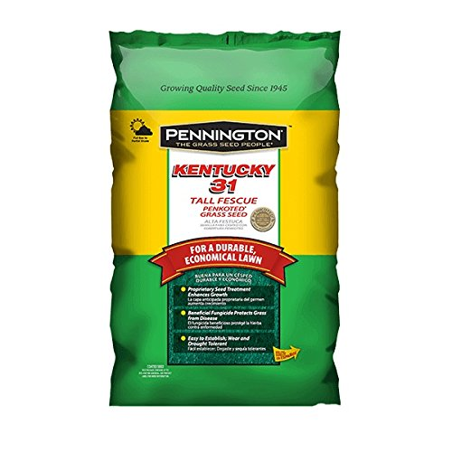 Pennington 100516050 Kentucky 31 Tall Fescue Grass Seed, 5 LB