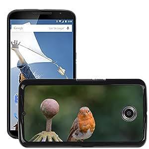 Super Stella Slim PC Hard Case Cover Skin Armor Shell Protection // M00145938 Robin Bird Songbird Animal // LG Google Nexus 6