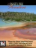 Nature Wonders - Yellowstone National Park - Wyoming - USA