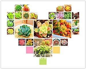 Promoción! Drosera peltata Semillas plantas de jardín de plantas carnívoras Bonsai Egeria Sundew Semillas 100 piezas / paquete, # UV1TRP