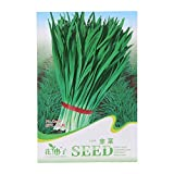 Poity Vegetable Seeds Seeds More Than 16 Healthy Green Your Favourite 1 Bag Chinese Chives