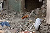 A teddy bear lies amidst rubble in Gori after the recent conflict between Georgia and Russia. Membe