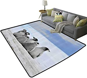 Sea Animals Decor Collection Rustic Area Rugs Young Penguins Picture Background with Snow Pile and Winter Sky Picture Print Gifts for Men Alice Blue Gray, 3'x 5'(90x150cm)