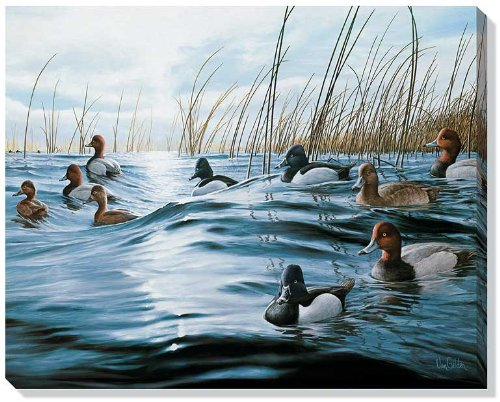 - Shifting Winds Canvasback Ducks Wrapped Canvas by Ron Van Gilder