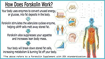 La forskoline Ultra 100% extracto de forskoline natural, suprime el apetito, disuelve la grasa del vientre, acelera la pérdida de peso, promueve la ...
