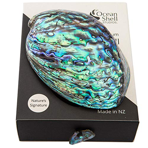 Polished Abalone Shell in Gift Box by Ocean Shell Studios, 100% Natural Shell for Smudging, Cleansing, Meditation, Home Décor and to Gift. ()