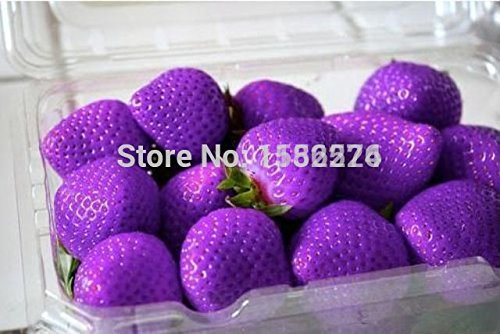 100pcs 100% Genuine Fresh Rare Purple Strawberry Seeds - bonsai flower plant fruit vegetables seeds SVI