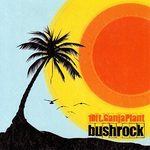 Bush Rock