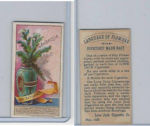N366 Lone Jack, Language of Flowers, 1887, (Ambrosia Flowers)