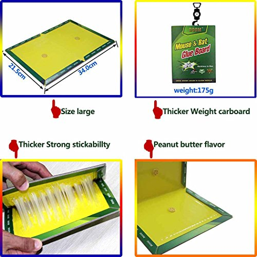 Eiito rat glue traps (Pack of 10), rodent traps sticky boards, mouse trap glue board, cockroach insects trap adhesive board by Eiito (Image #3)