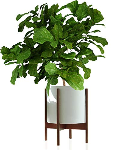 Fox & Fern Mid-Century Modern Plant Stand - Acacia - EXCLUDING 12