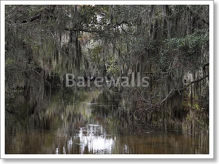 Spanish Moss Hanging From Trees Paper Print Wall Art (18in. x 24in.) (Spanish Moss Hanging)