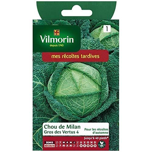 Sachet graines Chou de milan gros des vertus 4 Vilmorin