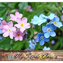 (1,000) MIXED Pink White Blue FORGET ME NOT Seeds - Myosotis sylvatica -Zone 3-9