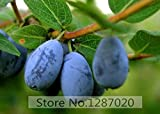 Hot Sale! 200pcs Fresh Rare Lonicera caerulea Fruit Seeds chinese blueberry delicious fruit seeds for home garden planting seeds family worship