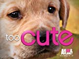 Too Cute! Season 1