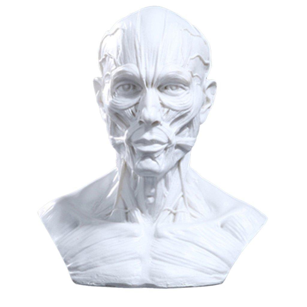 MagiDeal 4' Policci Statua Busto Uomo In Resina Anatomia Testa Muscolo Osso Medico Artista Addobbi Casa Studio Idea, per Disegno Scuola - #1