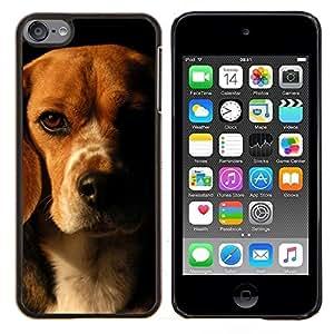 Beagle Marrón Negro perro de mascota- Metal de aluminio y de plástico duro Caja del teléfono - Negro - iPod Touch 6