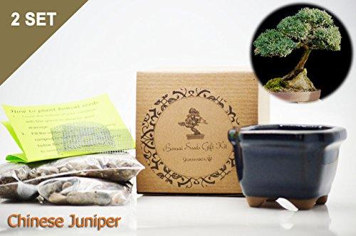 Set of 2 Chinese Juniper Bonsai Seed Kit- Gift - Complete Kit