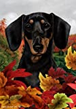 Dachshund B/T – Tamara Burnett Fall Leaves Large Flags Review
