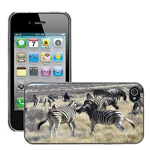 Bild Hart Handy Schwarz Schutz Case Cover Schale Etui // M00134189 Zebras kämpfen Africa Safari // Apple iPhone 4 4S 4G