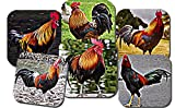 Gorgeous Colorful Roosters Photo Art Coasters Gift Set of 6 unique images