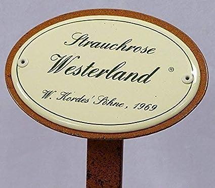 Rosarium Uetersen W.Kordes`Söhne 1977 Rosenschild Emaille Strauchrose