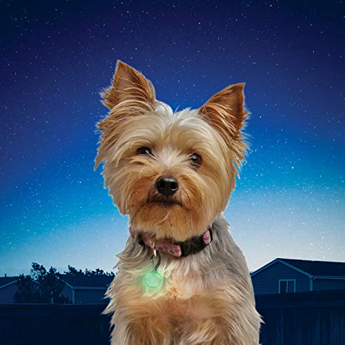 (Nite Ize PetLit LED Collar Light, Dog or Cat Collar Light, Replaceable Batteries, White LED Lime Jewel Design)