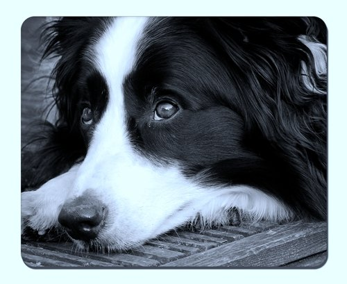 Black and white Border Collie Mousepad,Gaming Mouse Pad (10.2x8.2 inches)