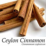 Ceylon CINNAMON Tree~ LIVE SPICE TREE Cinnamomum zeylanicum Med size Potd Plant