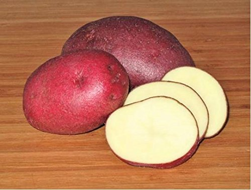 SEED POTATOES - 1 lb. Red Cloud * Organic Grown * Non GMO * Virus & Chemical Free * Ready for Spring Planting *