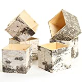 Koyal Wholesale Birch Wedding Square Cube Vases with Birch Bark 6-Pack, Real Wood