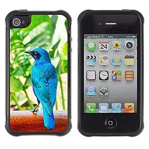 Paccase / Suave TPU GEL Caso Carcasa de Protección Funda para - Blue Tropical Bird Nature Rainforest - Apple Iphone 4 / 4S
