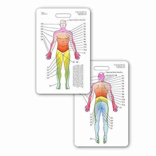 Neuro Dermatome Diagram Vertical Badge ID Card Pocket Reference Guide Neurology (1 Card)