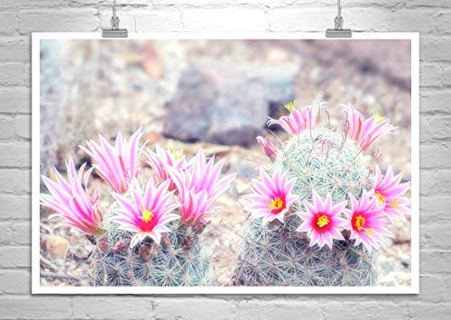Amazon Pink Cactus Flower Print Desert Flower Photography