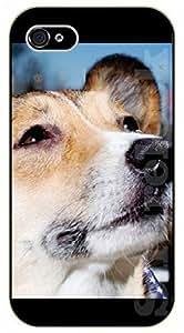 iPhone 5C Meditation - black plastic case / dog, animals, dogs