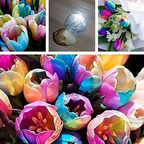 TelDen 100pcs/ Bag Rainbow Tulip Bulbs Seeds Garden Flower Plant Flowers
