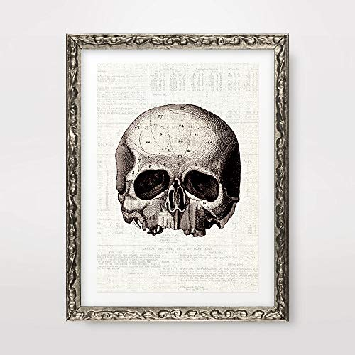 SKULL MEDICAL ART PRINT ANATOMICAL ANATOMY MEDICINE HUMAN BODY BIOLOGICAL CHART DIAGRAM ILLUSTRATION VINTAGE ANTIQUE Poster Home Decor Wall Picture A4 A3 A2 (10 Size Options) -