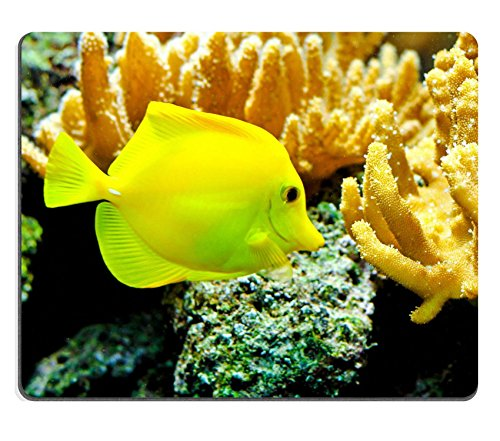 Liili Mouse Pad Natural Rubber Mousepad IMAGE ID: 8201892 One yellow tang fish in tropical aquarium - Yellow Tang Animals