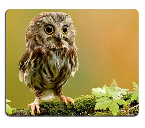 baby Owlet owl bird branch Mouse Pads Customized Made to Order Support Ready 9 7/8 Inch (250mm) X 7 7/8 Inch (200mm) X 1/16 Inch (2mm) High Quality Eco Friendly Cloth with Neoprene Rubber Liil Mouse Pad Desktop Mousepad Laptop Mousepads Comfortable Computer Mouse Mat Cute Gaming Mouse pad (Mouse And Owl)