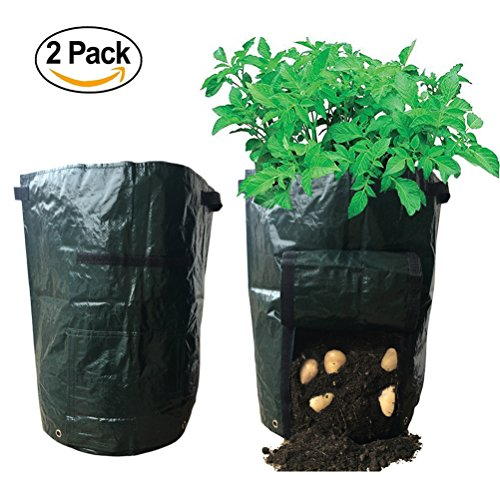 Huouo Planter Growing Vegetables Harvesting product image