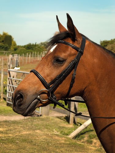 Brown Cob Brown Cob Heritage English Leather Horses Show Bridle