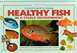 A Practical Guide to Keeping Healthy Fish in a Stable Environment, Lance Jepson, 1903098017