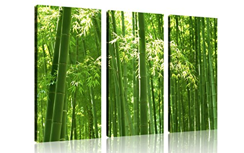 QICAI 3 Panel Canvas Wall Art For Home Decor Luscious Sunlit Green Bamboo  Forest Nature Painting