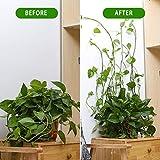 30PCS Plant Climbing Wall Fixture Clips Vine