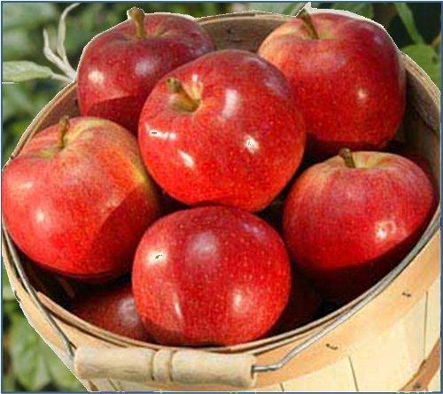 Mountain Apple (Fuji Apples (1 Dozen) from Organic Mountain)
