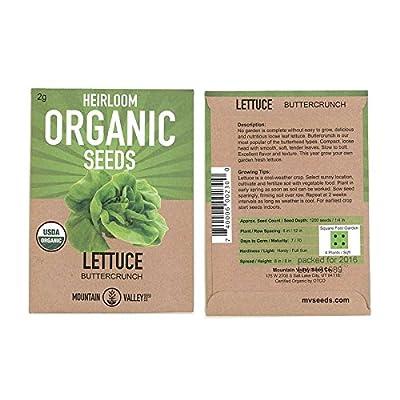 Organic Lettuce Garden Seeds - Buttercrunch - Non-GMO, Heirloom Vegetable Gardening & Microgreens Seeds; AKA Butterhead